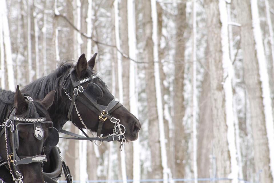 photo-chevaux-activites_erabliere-du-ruisseau